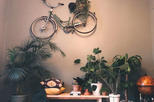 Bedre inneklima med grønne planter